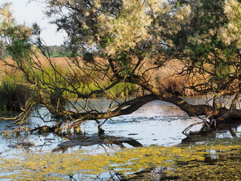 oder delta naturpark